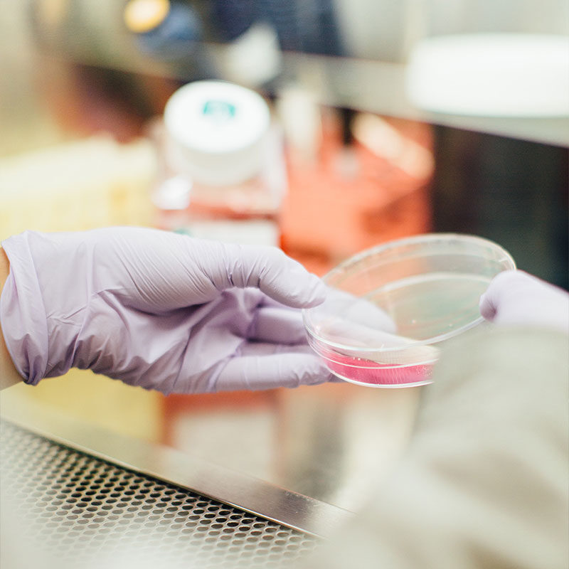 Science lab with petri dish